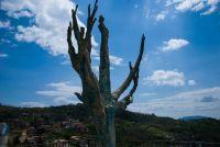 grottolella-albero-dell-amore-1-jpg-jpg